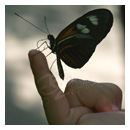 butterfly with little girl photograph thumbnail.