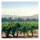 V Sattui Vineyard in california waterography photograph thumbnail.